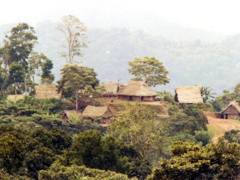 Peruvian Selva Andina